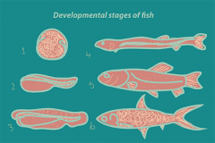 Fish Development